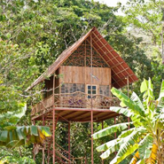 Airbnb treehouse listing in Costa Rica