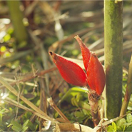 Longoza plant grown for Dior