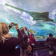 Fairmont Royal York at Ripley's Aquarium