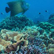 Marine life around Four Seasons Resort Seychelles