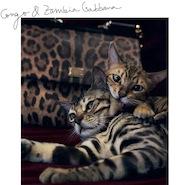 Stefano Gabbana's cats, Zambia and Congo