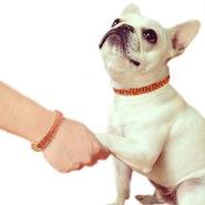 Man's Best Friend Biography Bracelet Set by Astley Clarke
