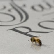 Fairmont's Bee Sustainable program
