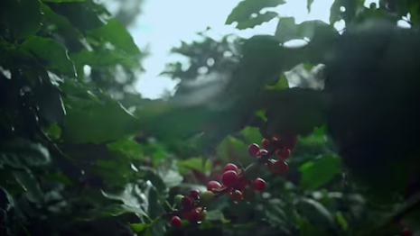 Video still from Chanel's Blue Serum series