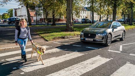 Jaguar Guide Dog