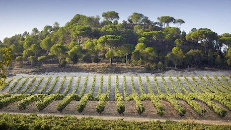 Vega Sicilia Vineyard